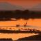 Mabecos esfrangalham impala atolada na lama