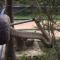 Píton enorme engole cachorro no sul da Tailândia