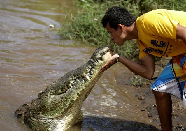 Juan Cerdas beijando crocodilo no rio Tárcoles