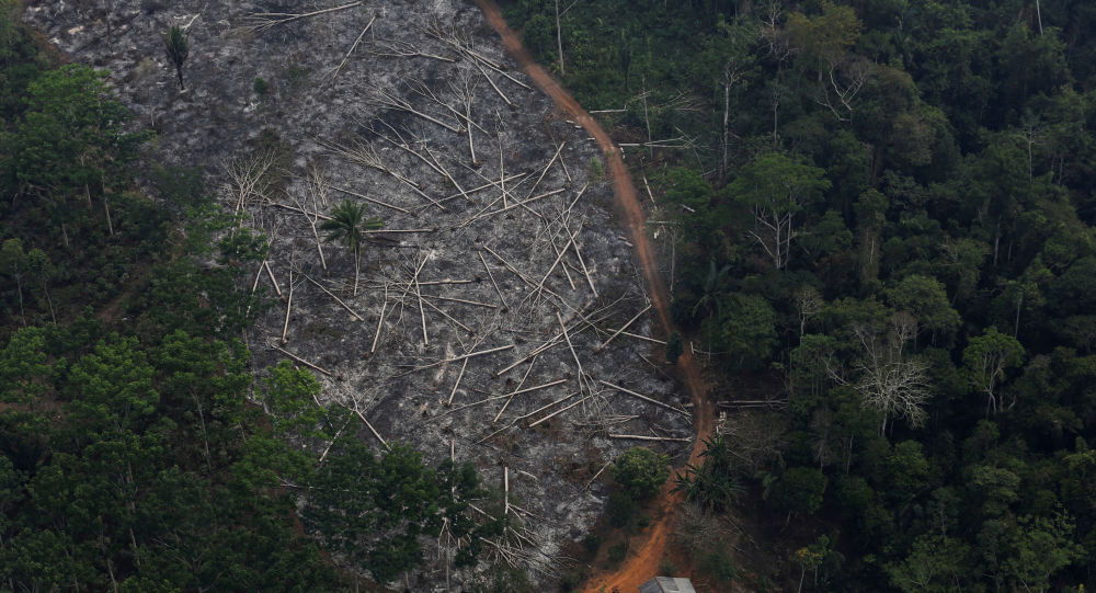Área desmatada da Floresta Amazônica