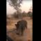 Dia de fúria: rinoceronte persegue turistas em safári sul-africano