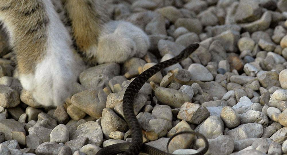 Gato e serpente (imagem referencial)