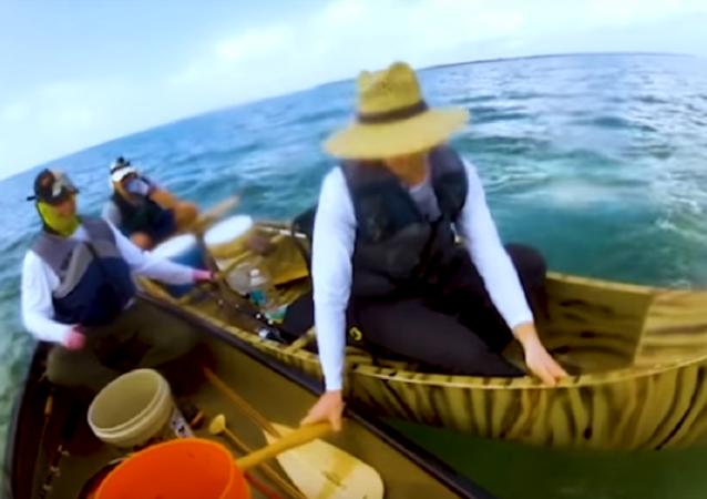 Tubarão ataca pescadores