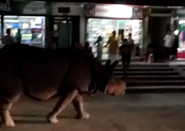Rinoceronte caminha tranquilamente por rua movimentada no Nepal