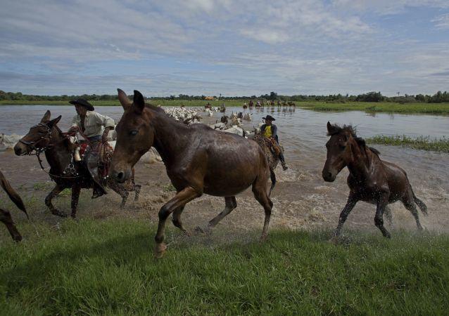 Cavalos no rio Taquari, em Corumbá, no Pantanal, em maio de 2017