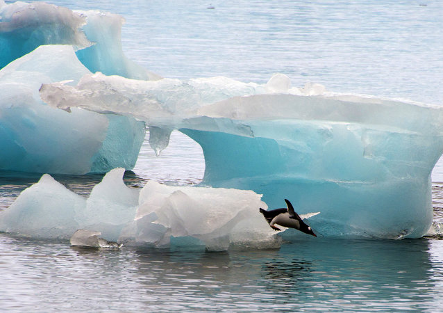 A penguin dives from an ice block in front of Brazil's Comandante Ferraz base, in Antarctica on March 10, 2014.