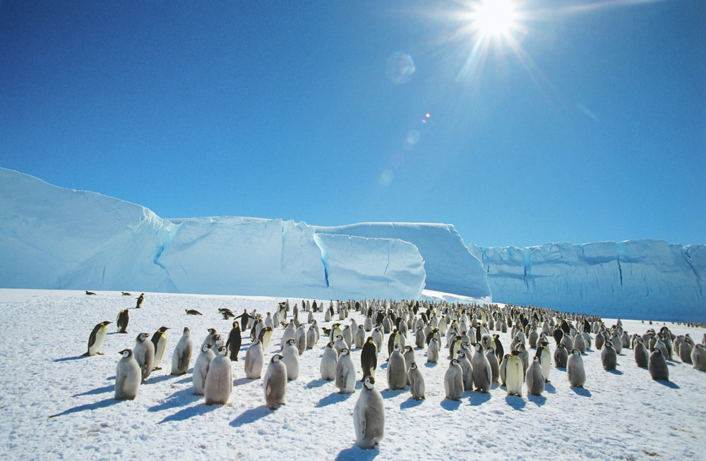 Pinguins-imperador perto da estação soviética de pesquisas antárticas Mirny, em 1989