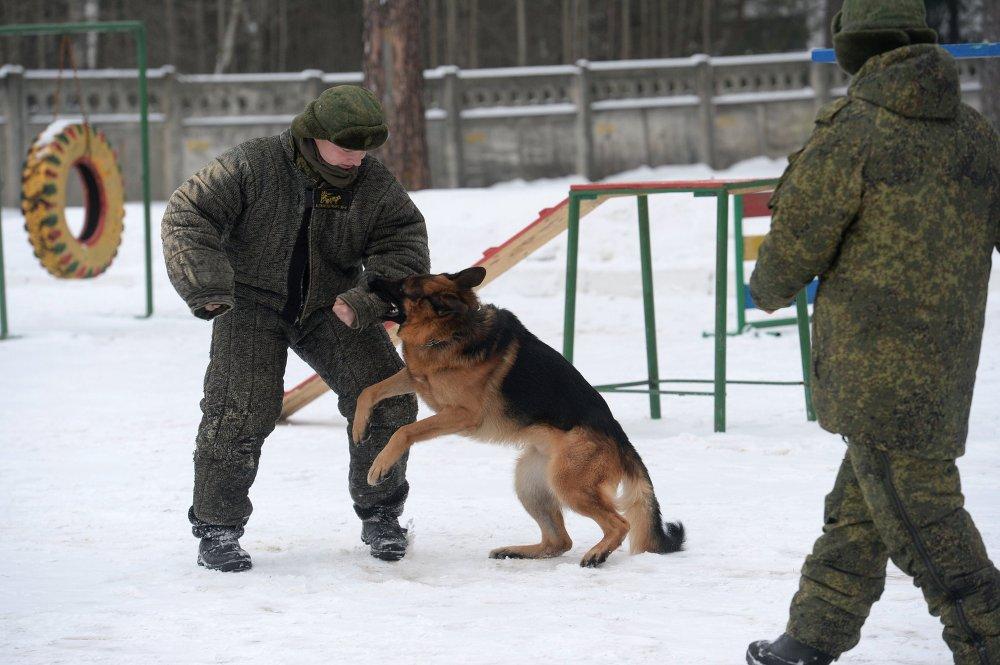 Centro de treinamento de cães
