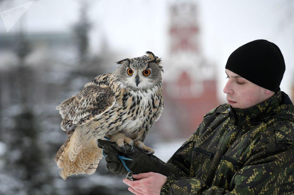 Funcionário do serviço ornitológico do Kremlin com uma coruja