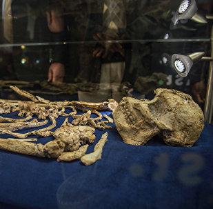 Esqueleto do Hominini denominado Little Foot é revelado pela primeira vez ao público na Universidade de Witwatersrand, Joanesburgo, África do Sul, em 6 de dezembro de 2017