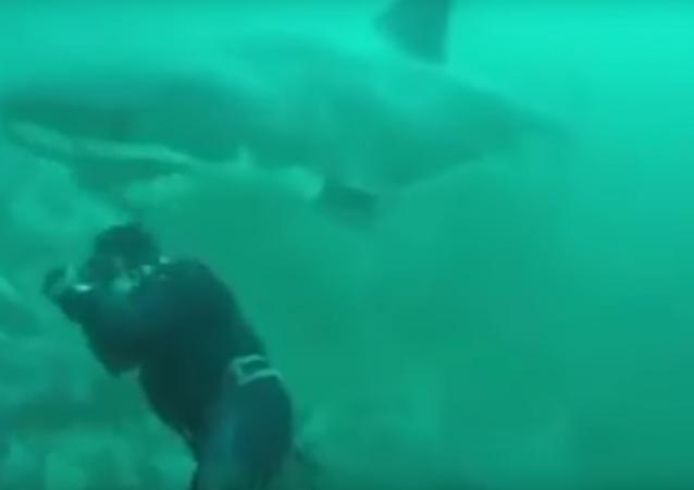 Que susto! Homem escapa por pouco de ser vítima de tubarão enorme