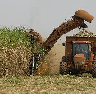 Ministra da Agricultura, Pecuária e Abastecimento visita Alemanha e Suíça para tratar de importantes pautas do setor agrícola e prestar esclarecimentos
