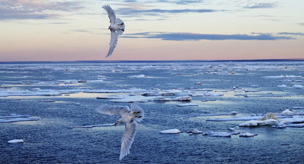 Pássaros voando na região do arquipélago Ártico Canadense