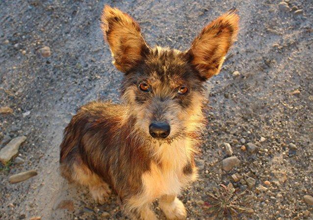 Um cachorro, imagem referencial