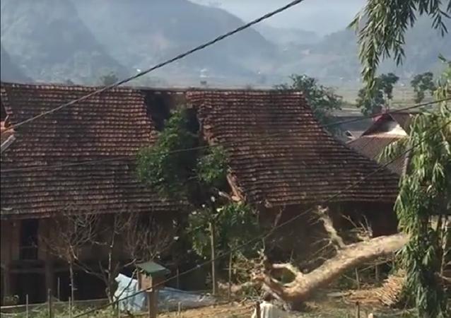 Árvore danifica casa