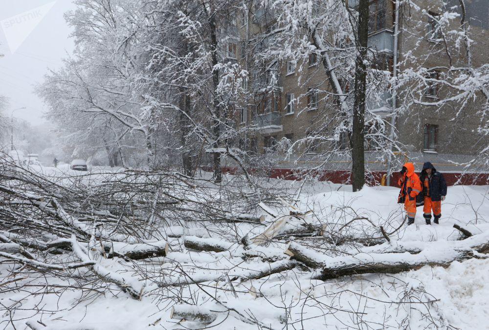 Empregados dos serviços públicos removem árvores caídas durante nevada em Moscou
