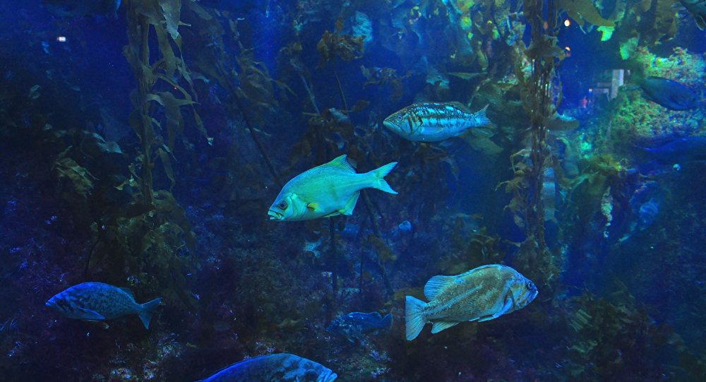 Peixes (imagem referencial)