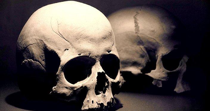 Crânios (imagem referencial)
