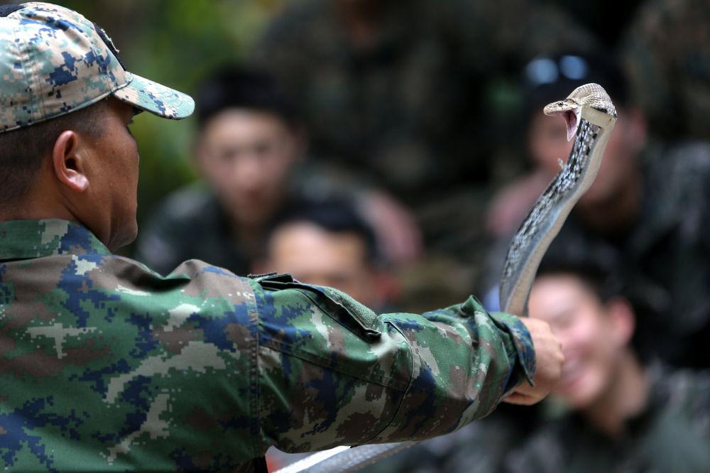 Fuzileiro naval com cobra na mão durante as manobras Cobra Gold