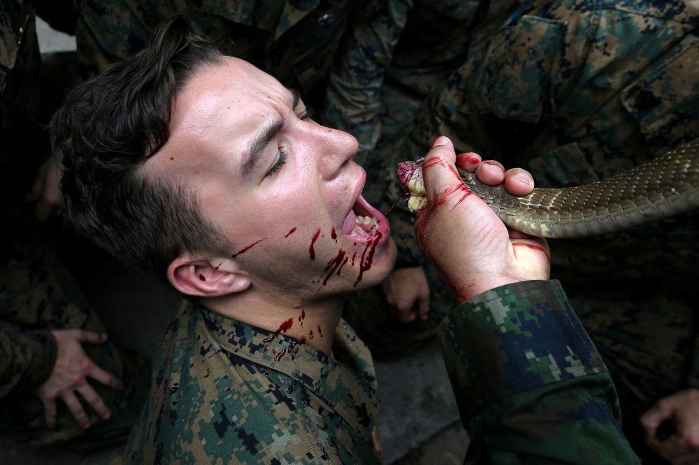 Fuzileiro naval bebe sangue de cobra no âmbito dos treinamentos de sobrevivência, parte das manobras Cobra Gold realizados na Tailândia