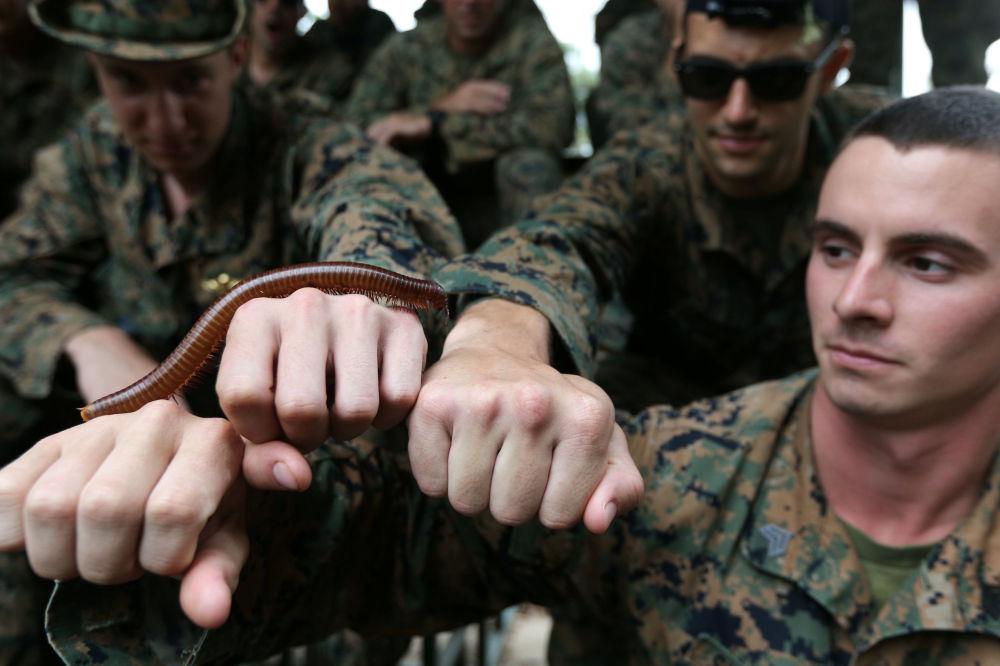 Fuzileiros navais participam das manobras Cobra Gold