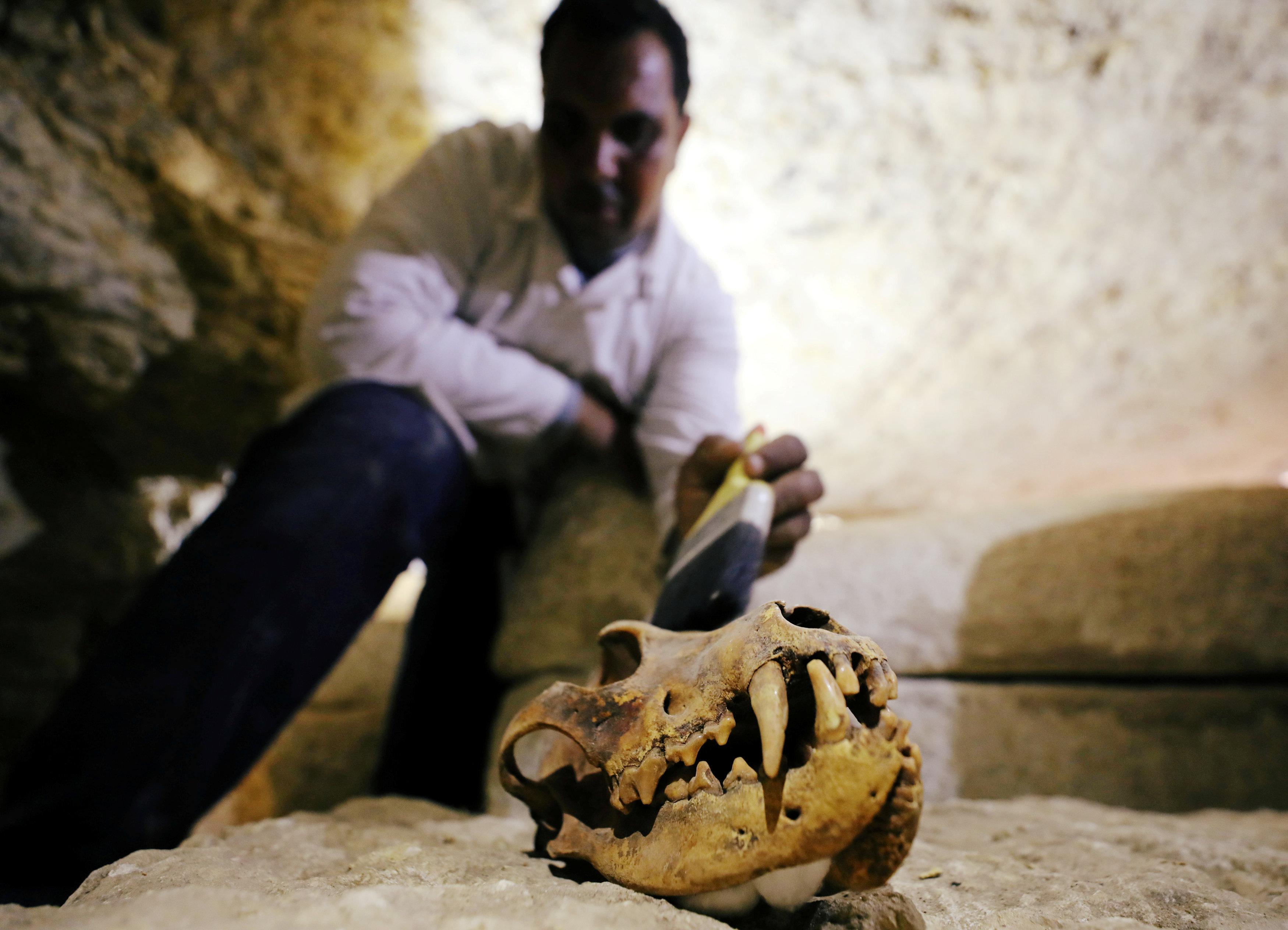 Arqueólogo limpa o crânio de um animal encontrado dentro da necrópole em Minia