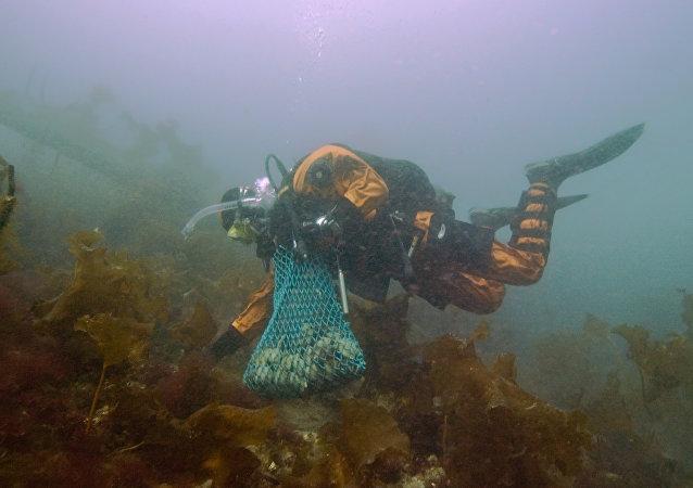 Mergulhador (imagem referencial)