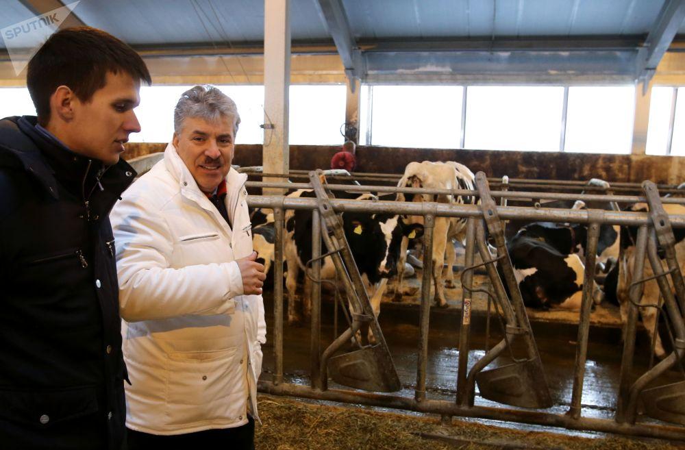 Pavel Grudinin visita granja leiteira no povoado do Sovkhoz Lenin na região de Moscou
