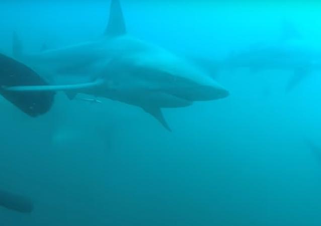 Foi filmado momento arrepiante em que tubarão ataca mergulhador