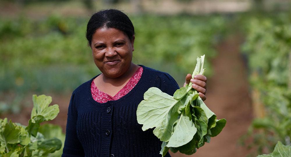 Uma mulher segura um maço de verduras produzidas e horta comunitária no Paraná em novembro de 2016.
