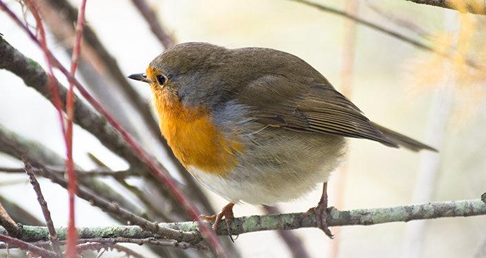 Uma ave