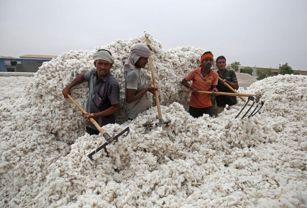 Trabalhadores descarregam algodão de um caminhão na cidade indiana de Kadi