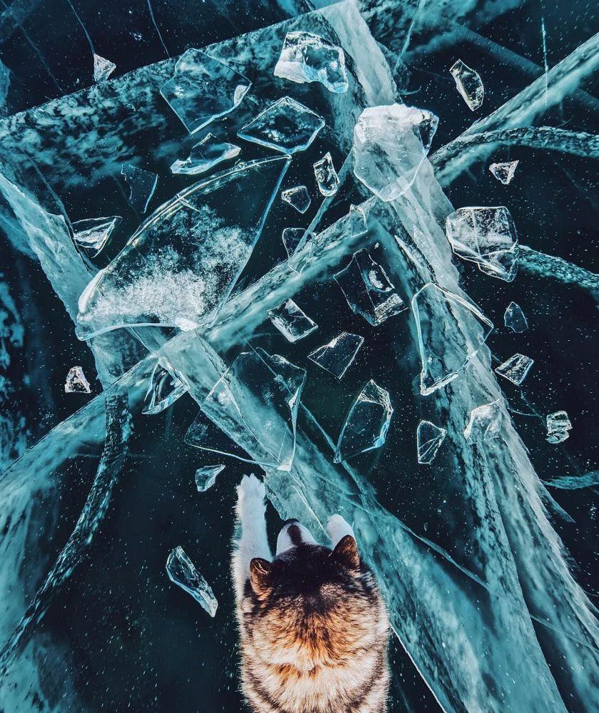 Cachorro no lago Baikal congelado