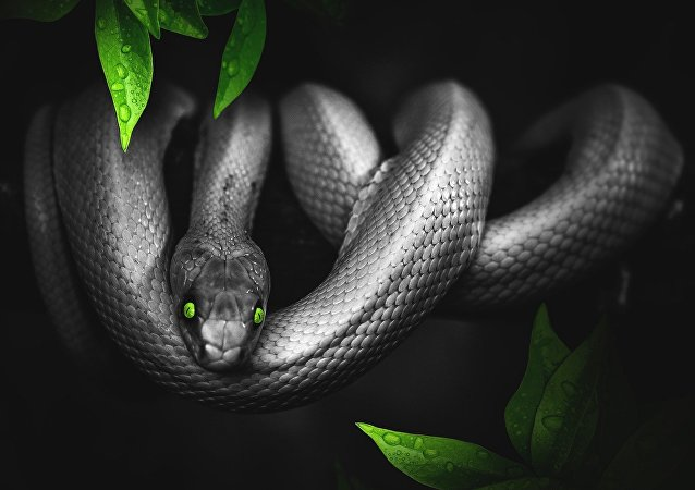 Serpente com olhos verdes (imagem ilustrativa)
