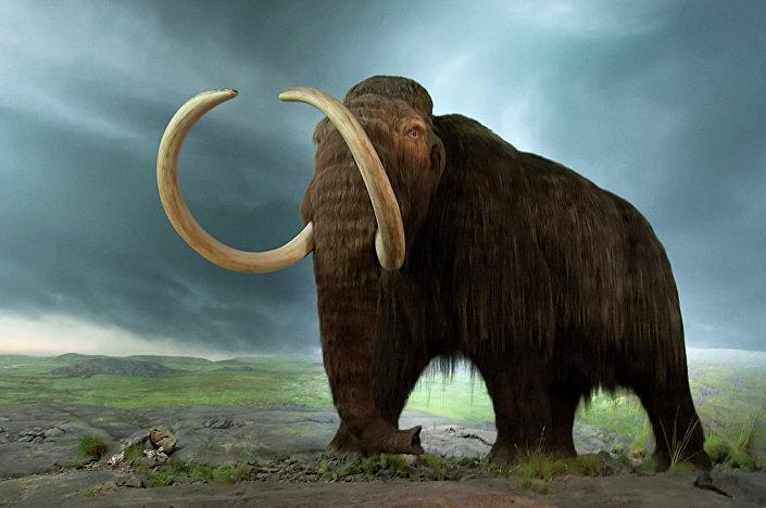 Mamute - animal extinto (imagem ilustrativa)