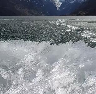 Arte da natureza: milhares de 'diamantes' se movem em dança lenta