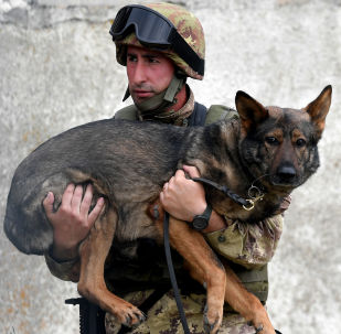 Soldado do exército italiano carrega seu cão durante exercício militar em um campo de treinamento em Cesano, perto de Roma, em 21 de maio de 2018