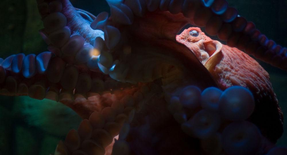 Lula gigantesca no mar (imagem referencial)
