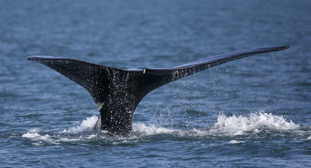 Cauda de uma baleia
