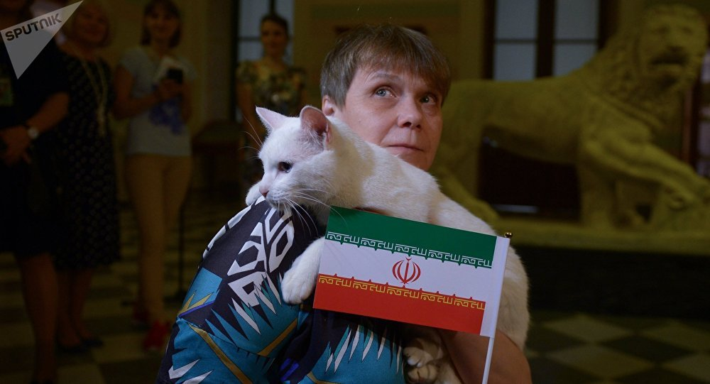 O gato oráculo Achilles prevê a vitória da seleção iraniana sobre o Marrocos na partida da Copa do Mundo FIFA 2018.
