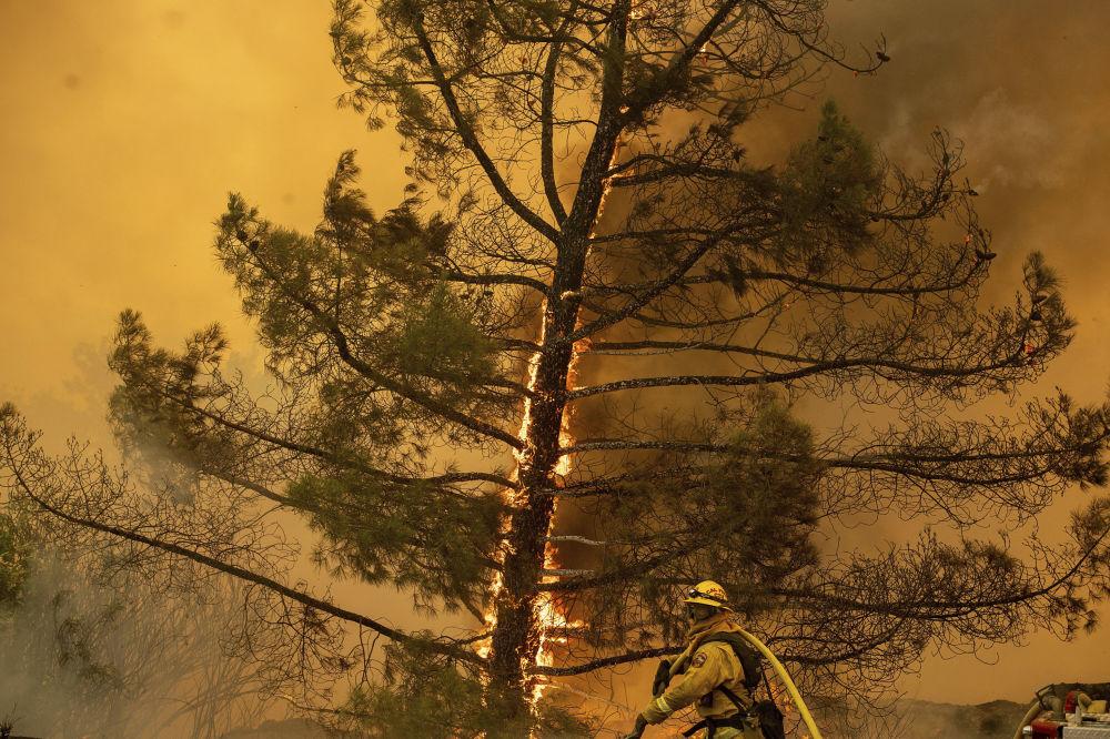 Bombeiro com uma árvore em chamas em fundo, Califórnia