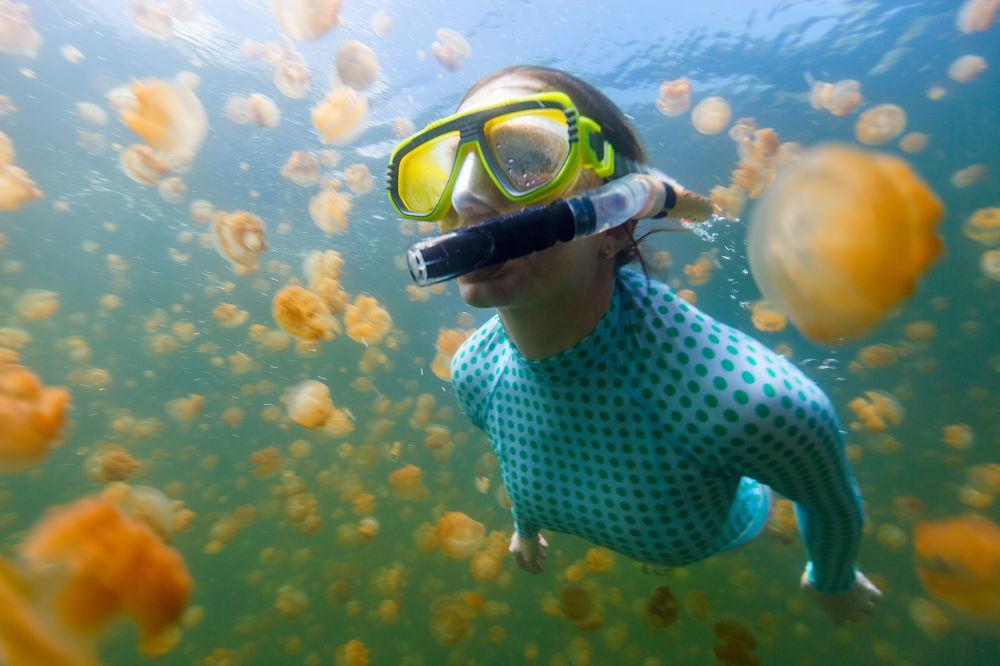 Aa medusas no Lago das águas-vivas conta com uma população de 2 milhões de exemplares, cuja espécie permite até mesmo tocá-las