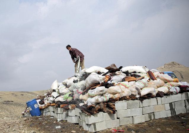 Um afegão prepara-se para incendiar ópio e narcóticos durante uma cerimônia de queima de drogas na periferia de Cabul, Afeganistão (foto de arquivo)