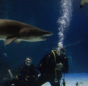 Tubarões com mergulhadores no fundo marítimo