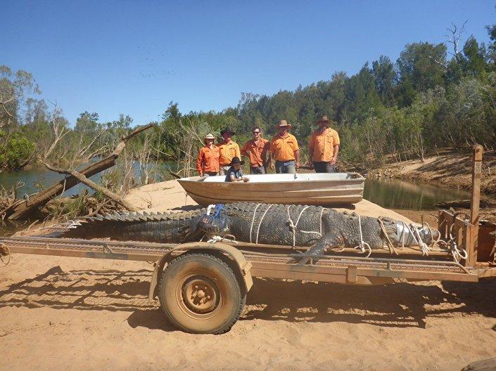 Crocodilo de 600 kg apanhado na Austrália