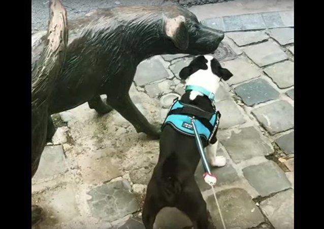 Cachorro de verdade latindo para estátua de cachorro