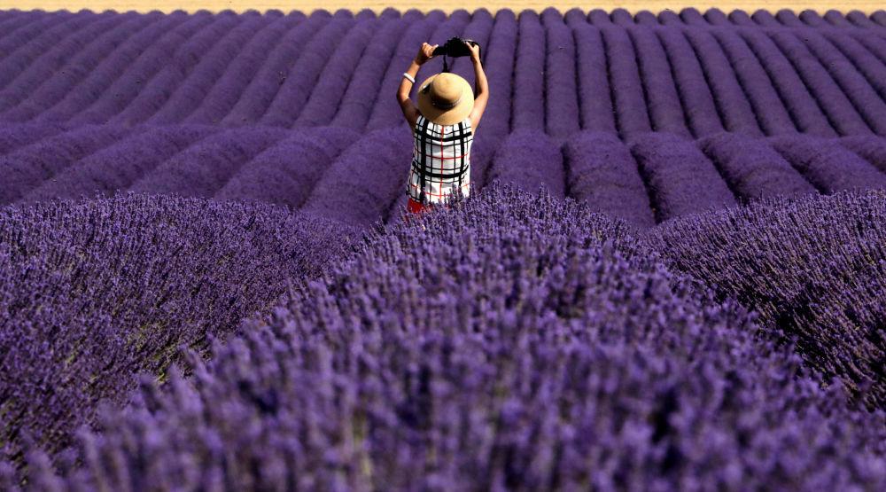 Turista chinês tirando foto em um campo de lavanda, França.