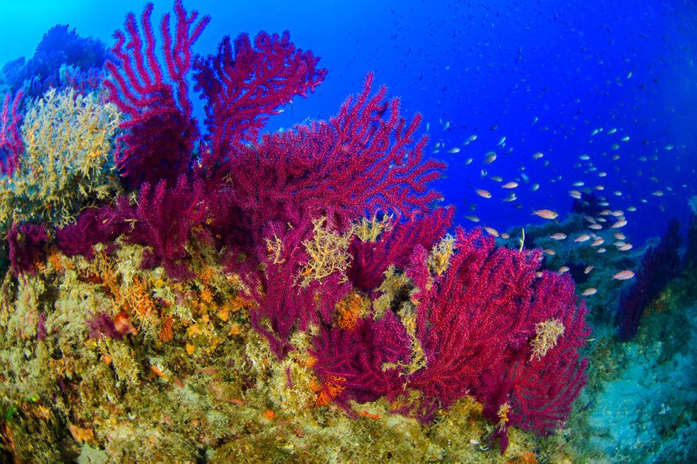 Cores vivas da vida marinha gravadas durante expedição às Ilhas Líparas, em maio de 2018