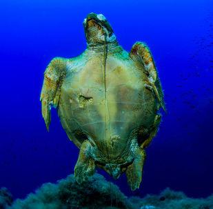 Uma tartaruga fotografada durante expedição às Ilhas Líparas, Itália, realizada em maio de 2018