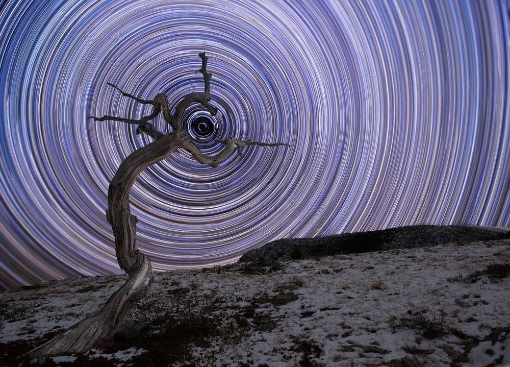 Rumo ao Norte por Jake Mosher. Zimbro inclinado nas Montanhas Rochosas (Montana, EUA), é preenchido com rastros de estrelas cadentes